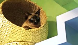 Ein Paradies f�r Katzen