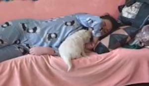 Wer schläft beim Herrchen