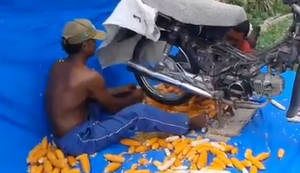 Maisk�rner vom Kolben trennen