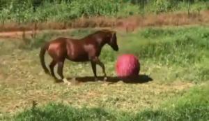 Ein Pferd am Ball