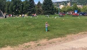 Vögel auf die Schwester losjagen