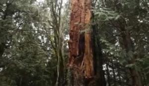 Wenn sich der Baum plötzlich auflöst