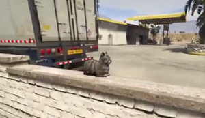 Katze erschrecken bei GTA V