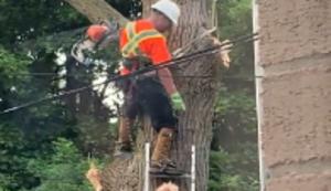 Zwischenfall beim Baum fällen