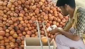 Zwiebeln nach Größe sortieren