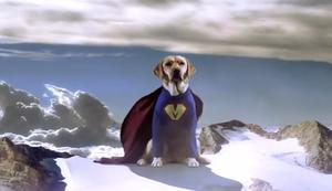 Max der Blindenhund