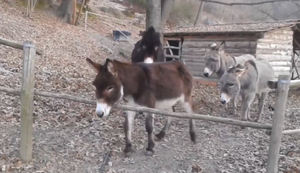 Esel auf der Flucht