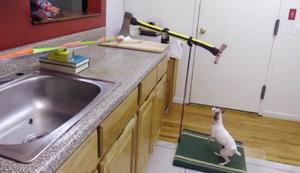 Tierische Küchenhilfe