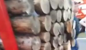 Holztransporter mit Versteck