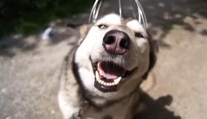 Kopfmassage für den Hund