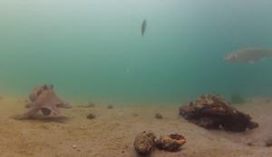 Begegnung unter Wasser