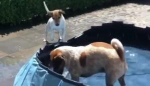 Wenn Hunde sich selbst beschäftigen