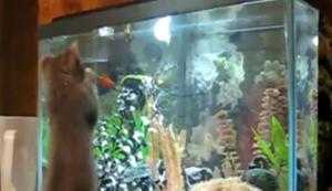 Katzen vs Aquarien
