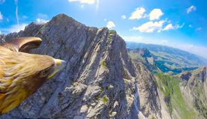 Adler fliegt über den Alpen