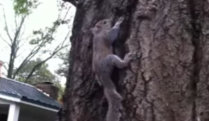 Eichhörnchen in die Freiheit entlassen