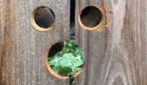 Guckloch für den Nachbarshund
