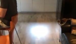 Kleine Katze setzt zum Sprung an