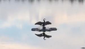 Vogel genießt die Ruhe