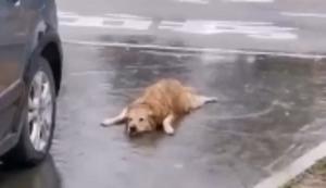 Hund liebt Wasser