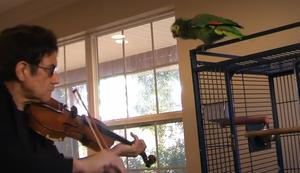Papagei mag keine Violinen