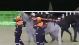 Krankentransport mit dem Pferd