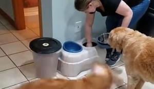 Tierischer Tornado in der Küche