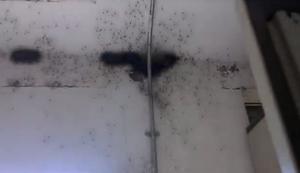 Die Spinnen-H�lle