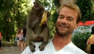 Ein Affe auf der Schulter