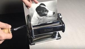 Hundefoto kopieren