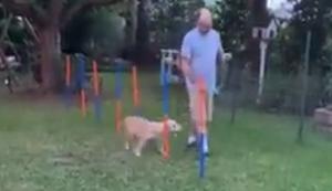 Mit dem Hund durch den Parkour