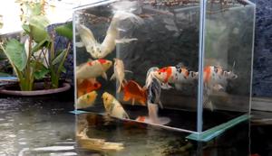 Kleiner Aussichtsturm für Fische