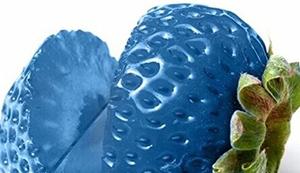 Leckere blaue Erdbeeren