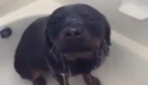 Hund in der Dusche
