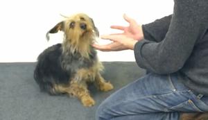 Zaubertricks für Hunde