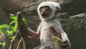 Affen trauern um Roboter-Affen