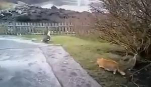 Katze vs Vogel