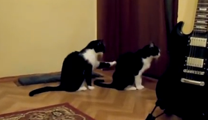 Eine Katze möchte sich entschuldigen
