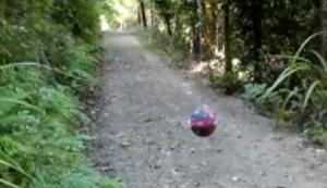 Ein Ball allein im Wald
